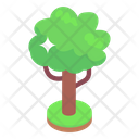 Maple Tree Icon