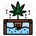 Hydroponic Cannabis Plant Icon