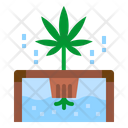 Marijuana Plant Cannabis Plant Hydroponic Icon