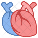 Medical Heart Body Icon