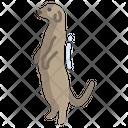Meerkat Icon