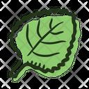 Leaf Melissa Plant Icon