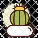 Melo Cactus Icon