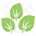 Shape Milkweed Wild Icon