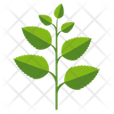 Mint Herb Leaves Icon