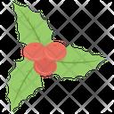 Mistletoe American Plant Phoradendron Icon