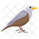Mockingbird Passerine Bird Bird Icon