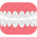 Molar Molar Teeth Tooth Icon