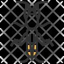 Mole Cricket Insect Icon