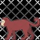Monkey Zoo Animal Icon