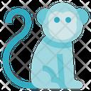 Biology Monkey Animal Icon