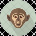 Monkey Head Haplorhine Icon