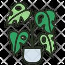 Monstera Deliciosa Leaf Green Icon