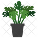 Monstera Potted Plant Icon