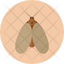 Moth Insect Butterfly Icon