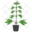 Motherwort Potted Plant Icon