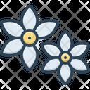 Motia Pikake Magnolia Icon