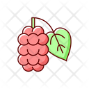 Mulberry Morus Fruit Icon