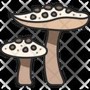 Fungus Mushroom Nature Icon