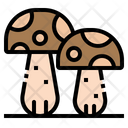 Mushrooms Oyster Toadstool Icon
