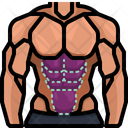 Musscle Gain Muscle Bodybuilding Icon
