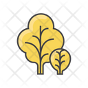 Mustard Greens Icon