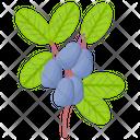 Nannyberry Icon