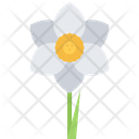 Narcissus Flower Ecology Icon