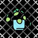 Natural Plant Houseplant Icon