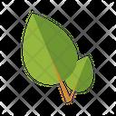 Natural Medicine Icon