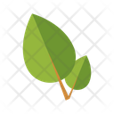Natural Medicine Alternative Medicine Leaves Icon