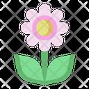 Nature Blossom Spring Icon