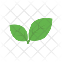 Nature Plant Leaves Icon
