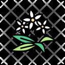 Neroli Flowers Aromatherapy Icon