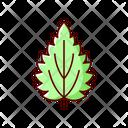 Nettle Leaf Plant Icon
