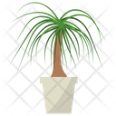 Nolina Potted Plant Icon