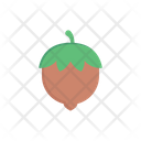 Nut Hazelnut Dryfruit Icon