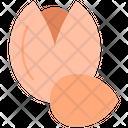 Nut Oktoberfest Pistachio Icon