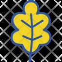 Oak Icon