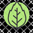 Oak Birch Nature Icon