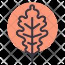 Oak Nature Leaf Icon