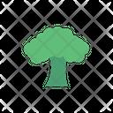 Oak Salad Leaf Icon