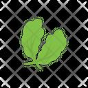 Oak Leaves Salad Icon