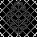 Oak Leaf Plant Icon