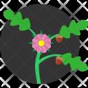 Oak Tree Leaf Icon