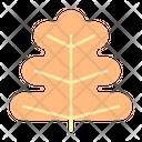 Oak Leaf Tree Nature Icon