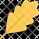 Oak Leaf Ecology Icon