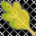 Oak Leaves Oak Nature Icon