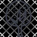 Oak Tree Shrub Icon