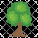 Round Woods Oak Icon